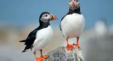 zeevogels seabirds