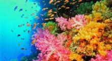 zeedieren marine life