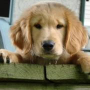 honden dogs