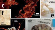 microvezels-diepzee-dieren-bristol