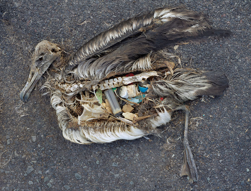 Image result for plastic soup bird