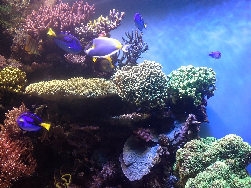 Major American Aquaria Stand Together To Reduce The