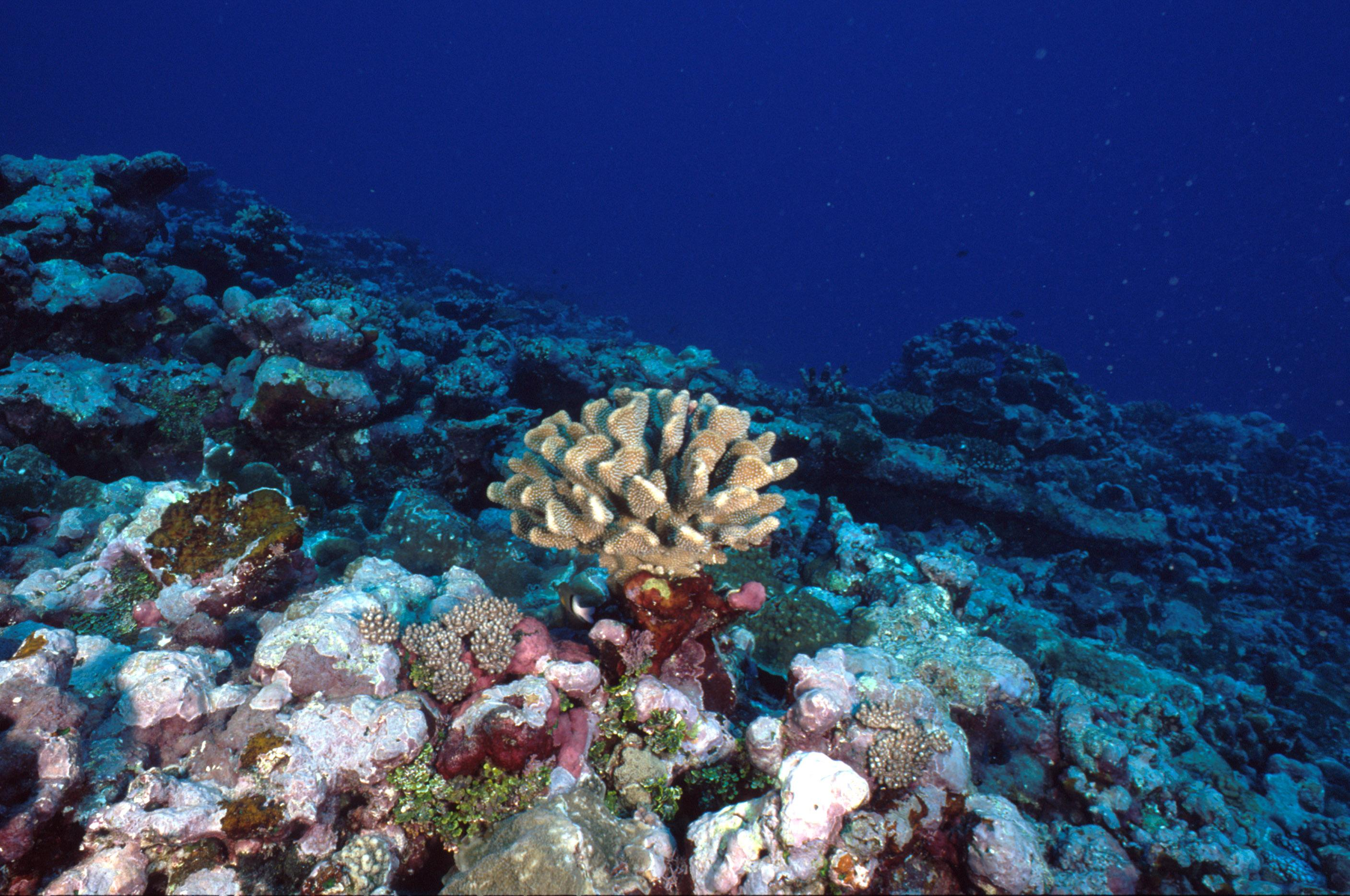 plastic is making coral reefs sick plastic soup foundation