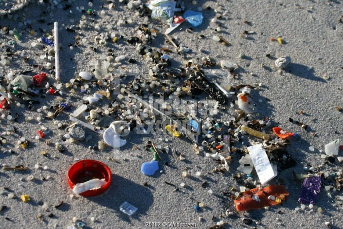Marine plastic pollution washed ashore - Mike Endres - Little Wing Photo