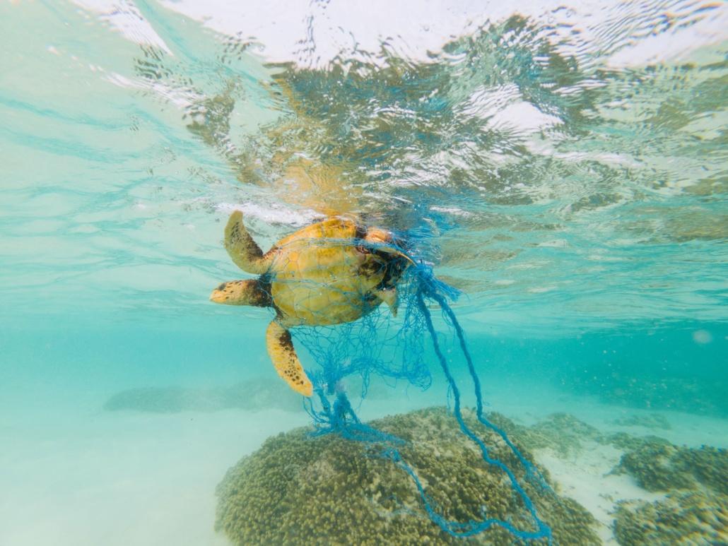 dieren dood door plastic