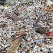 Ducor Petrochemicals als eerste Nederlandse plasticproducent verantwoordelijk gesteld voor vervuiling met plastickorrels