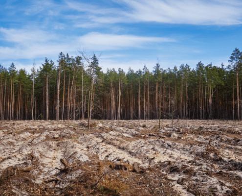 ecocide strafbaar stellen