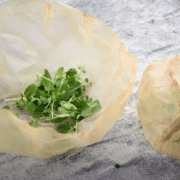 scoby solutions